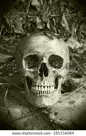still life with skull human in overgrown tree in monochrome filter effect.