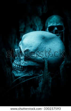 Still life with skull on dried wood background