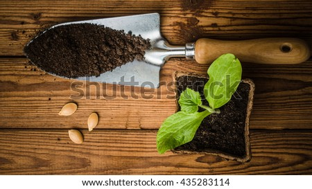 Still-life with sprouts and garden tool, the top view - stock photo