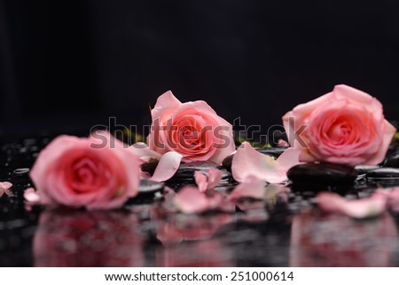 Still life with three rose ,petals and therapy stones - stock photo