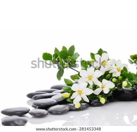 Still life with three white gardenia with therapy stones  - stock photo