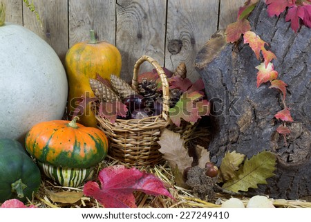 Still Life with Various Pumpkins, Wicker Basket Filled with Pine Cones, Acorns, Chestnuts and Autumn Leaves on a Hay, Vintage Wooden Planks  Background  - stock photo