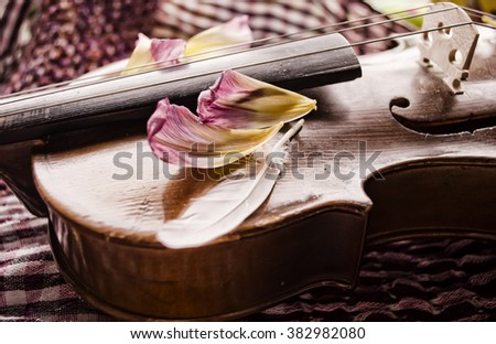 Still life with vintage violin and petals. Closeup of old wooden violin. Stringed music instrument on abstract background. - stock photo