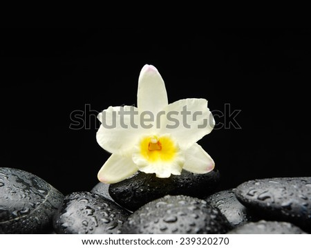 Still life with white flowers on wet stones  - stock photo