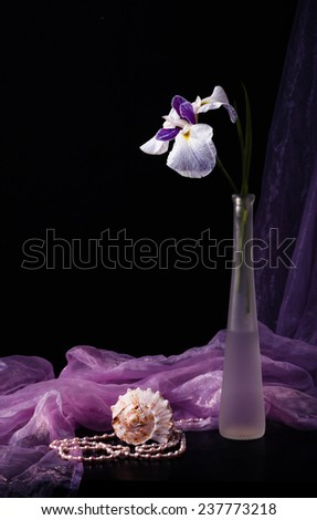 Still life with White iris in glass vase - stock photo