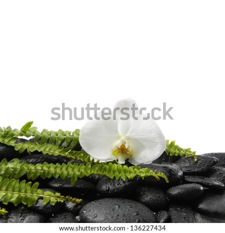 Still life with white orchid with green fern on wet black stones