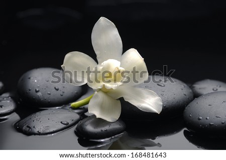 Still life with white orchid with therapy stones