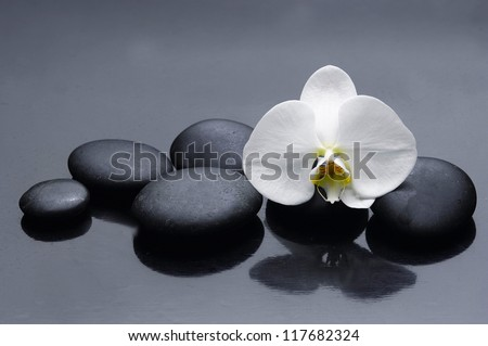 Still life with white orchid with zen stone