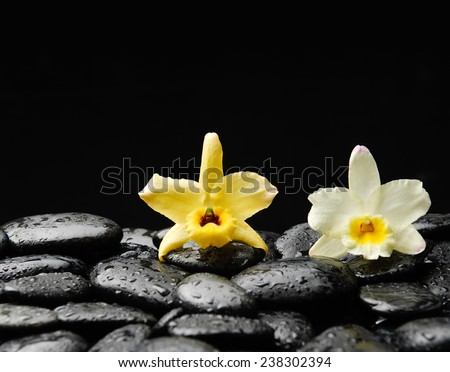 Still life with yellow and white orchid on wet zen stones - stock photo
