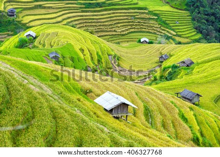 Stilt houses on terraced fields interspersed winding hills creating a unique beauty in the creation of human agriculture to livelihood in mountainous of northern Vietnam