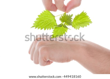 Stinging nettle arthritis medicine. Man holding nettle branch and touching his skin. Natural treatment.