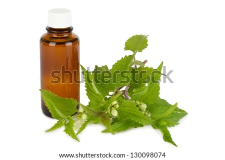 Stinging nettle with medicine bottle isolated on white background - stock photo