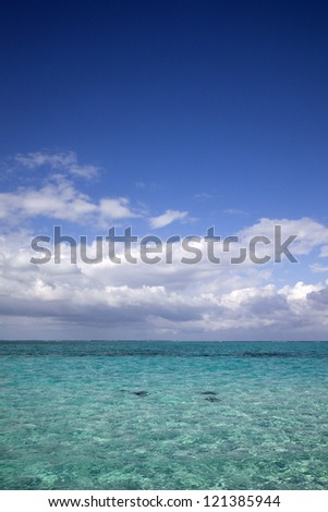 Stingrays swimming below the turquoise tropical waters at Stingray City, Cayman Islands, Caribbean - stock photo