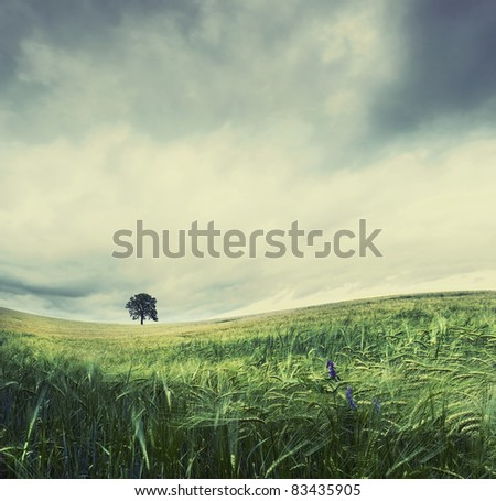 Stitched Panorama of solitude tree in agricultural field - stock photo