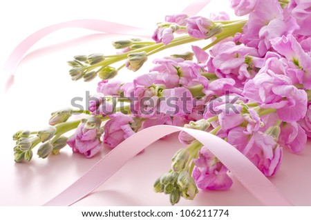 stock flower and ribbon on pink background - stock photo