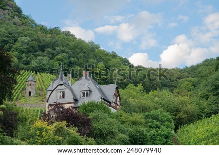 Stock image of a house surrounded by forests and grapevines with blue sky and white clouds