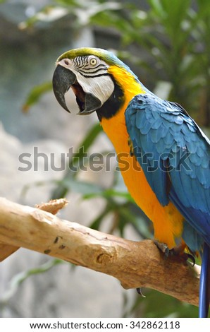 Stock image of a parrot  - stock photo