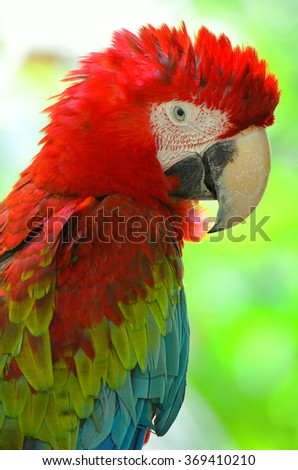 Stock image of a parrot