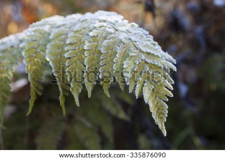 Stock image of green frost-covered fern leaf. Shallow DOF. - stock photo
