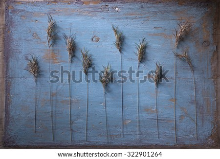 Stock image of plant motive on old  painted wooden background.  - stock photo