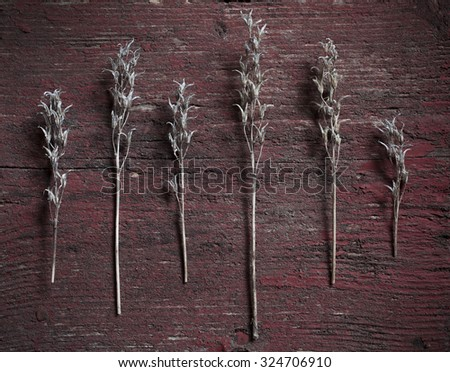 Stock image of plant motive on old red wooden background. Lens vignetting applied. - stock photo