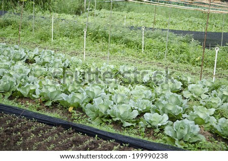 Stock image of vegetables growing at an organic farm  - stock photo