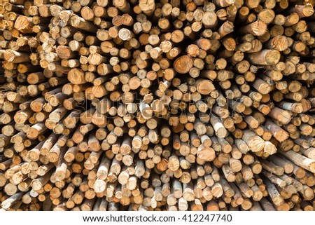 Stock of eucalyptus logs in a lumber yard - stock photo