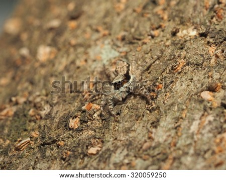 Stock Photo : Jumping Spider in the nature, tree