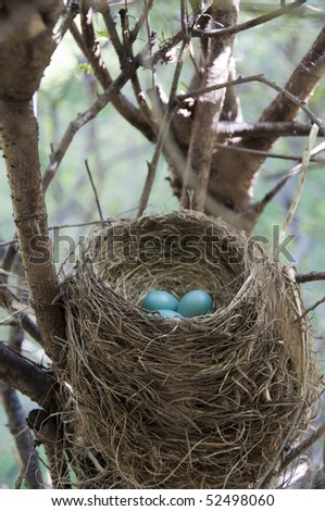 Stock photo of a red breasted robin's nest
