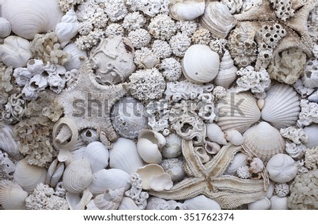 Stock photo of empty white seashells and corals, collected at Norwegian coast.