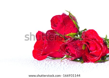 Stock Photo -red rose on white background