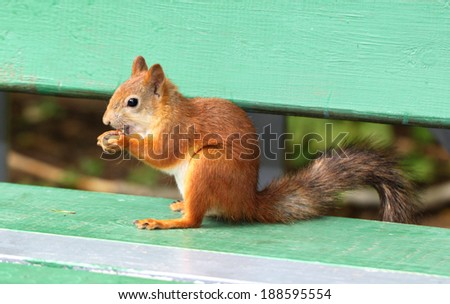 stock_Squirrel eating a delicious nut - stock photo