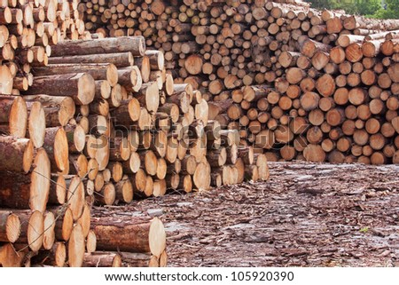 Stockpiled logs in a lumber yard - stock photo