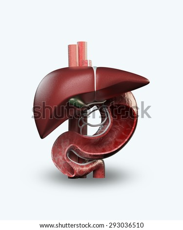 stomach and liver isolated on a white background - stock photo