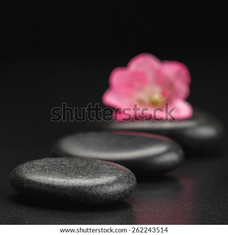 stone and petal   - stock photo