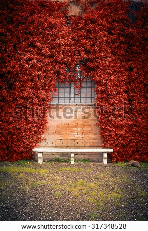 Stone bench and autumn ivy foliage on the old wall  - stock photo