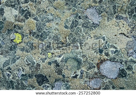 Stone covered with lichen. Natural texture - stock photo