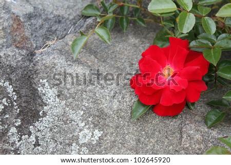 Stone Flower - stock photo