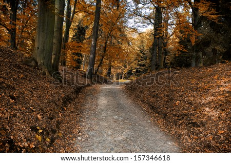 Stone forest road autumn forest - stock photo
