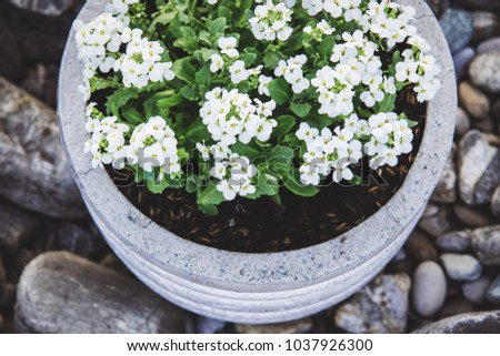 Stone garden arrangement spring flowers large stock photo royalty stone garden arrangement with spring flowers in large concrete plant pots close up white tiny mightylinksfo