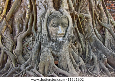 Stone  head in the tree roots, city is old capital of Thailand.