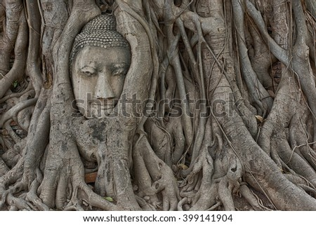 Stone head of buddha in root tree at Wat Mahathat in AYutthaya, Thailand (HDR)