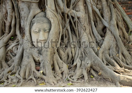 Stone head of buddha in root tree of Wat Mahathat in Ayutthaya, Thailand