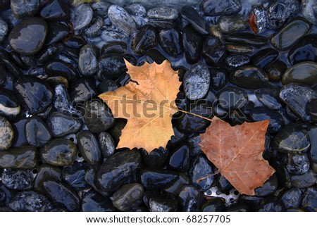 Stone of leaves - stock photo
