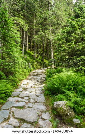 Stone path leading to the peak in summer