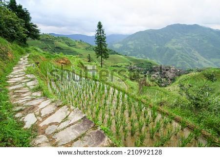 Stone pathway in longshen rice terraces - stock photo