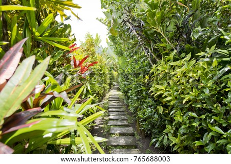 Stone pathway surrounded by green, lush plants and trees in a tropical environment