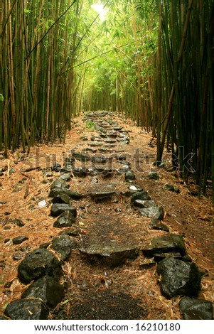 Stone pathway winding through the bamboo forest in Hana, maui. - stock photo