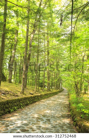 Stone paved road in forest, Happy Valley, Karuizawa, Nagano, Japan - stock photo
