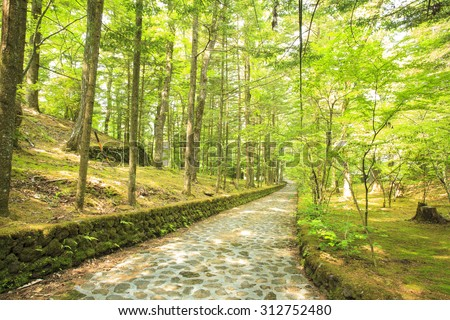 Stone paved road in forest, Happy Valley, Karuizawa, Nagano, Japan